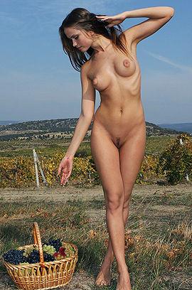 The Queen Of Vineyard